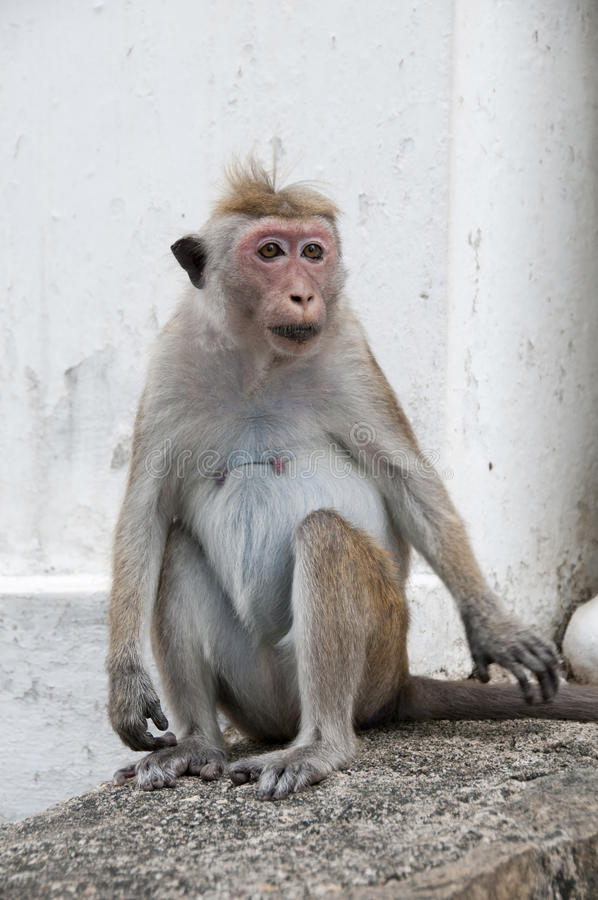 Download Smart look portrait stock photo. Image of evolution, animal - 19678916