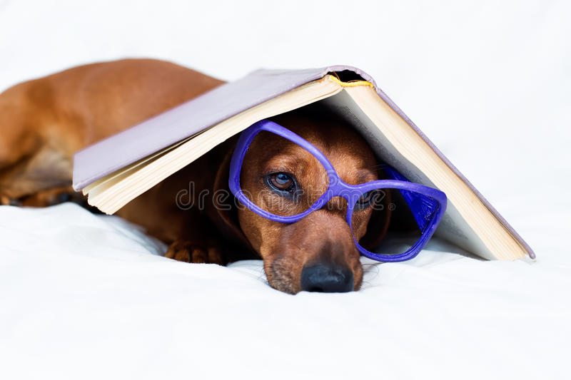 Download Smart looking dog stock image. Image of education, learn - 34306933
