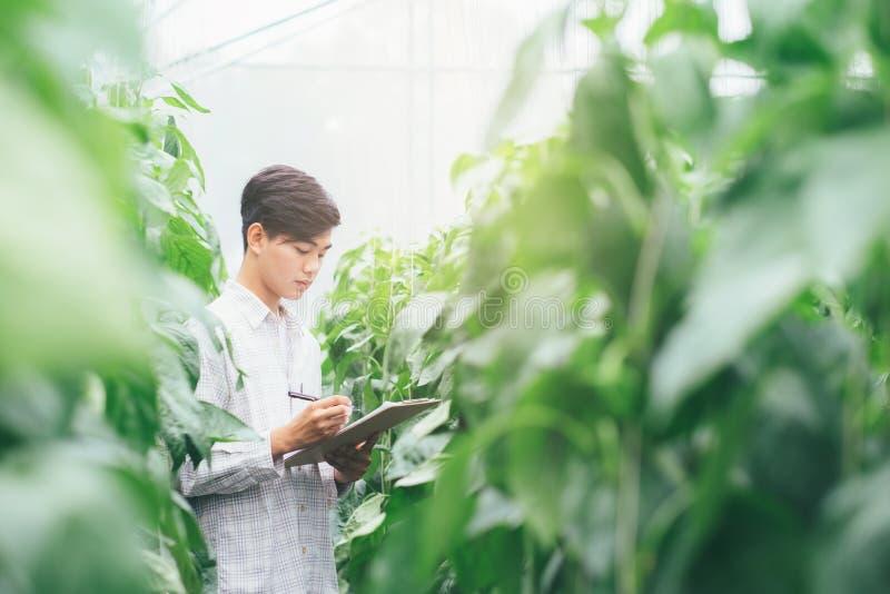 Smart que cultiva usando tecnologías modernas en agricultura fotografía de archivo