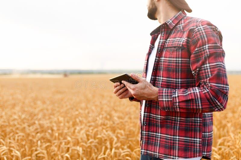 Smart que cultiva usando tecnologías modernas en agricultura Sirva al granjero del agrónomo con la tableta digital en trigo imagenes de archivo