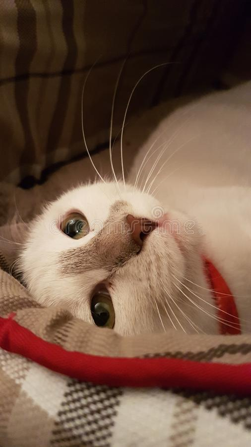 The thinking cat stock photo