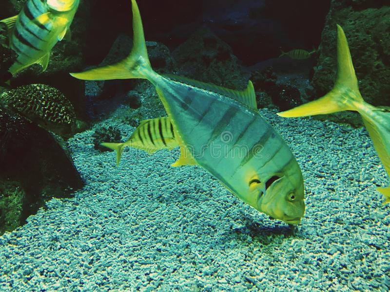 Up an down in the aquatic business life tropical fishes showing trends stock photography