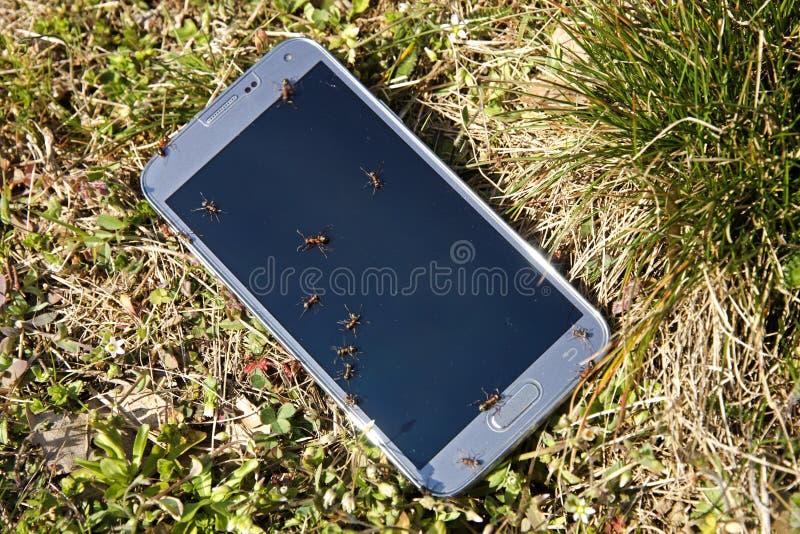 Smartphone стоковое изображение