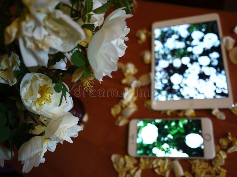 Smartphone e schermo della compressa Dettagli, macro, primo piano fotografie stock libere da diritti