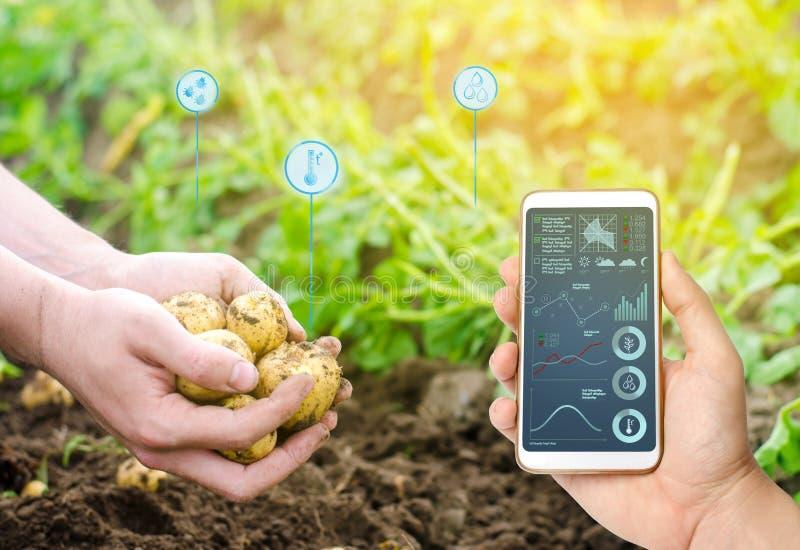 Smartphone in handen van een landbouwer Slimme landbouw Automatisering en verbetering van de kwaliteit van de gewassen Hoge techn royalty-vrije stock afbeeldingen