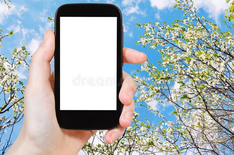 Smartphone i kwitnąć czereśniowego drzewa i niebieskiego nieba obrazy royalty free