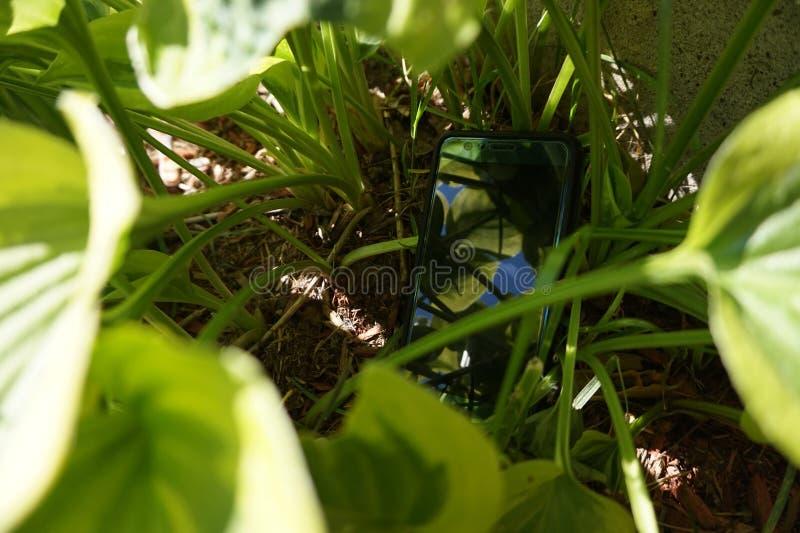 Smartphone nascosto in piante verdi fotografia stock