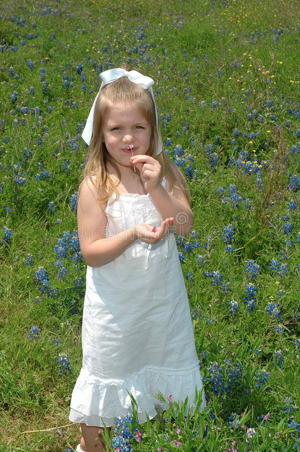 Smell the Flower. A young silly girl laughs as she holds a little flower up to her nose. Blue Bonnets are native Texas flowers. The Blue Bonnet is the State stock photo