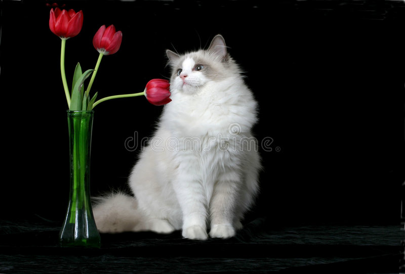 Download Smell the Flowers stock photo. Image of animal, soft, cuddly - 516376