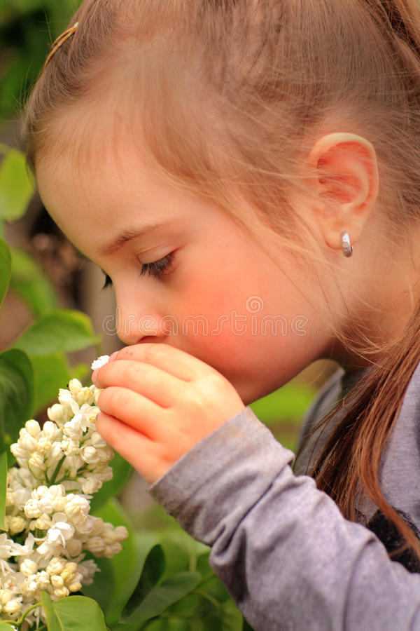 Free Smelling Flowers Stock Image - 52845511