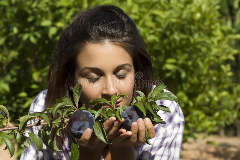Smelling plums. Beautiful young woman smelling raw plums of the tree stock photo