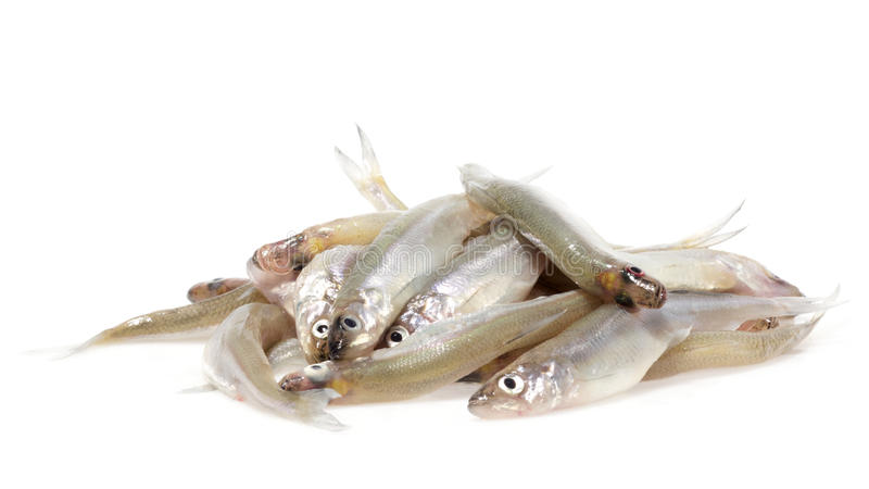 Smelt foto de stock royalty free