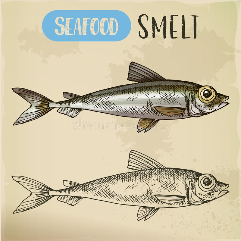 Smelt or freshwater fish side view sketch. Small, typical smelt or freshwater fish sketch. Ocean or sea seafood side view. Vegetarian shop or store, fish market stock illustration