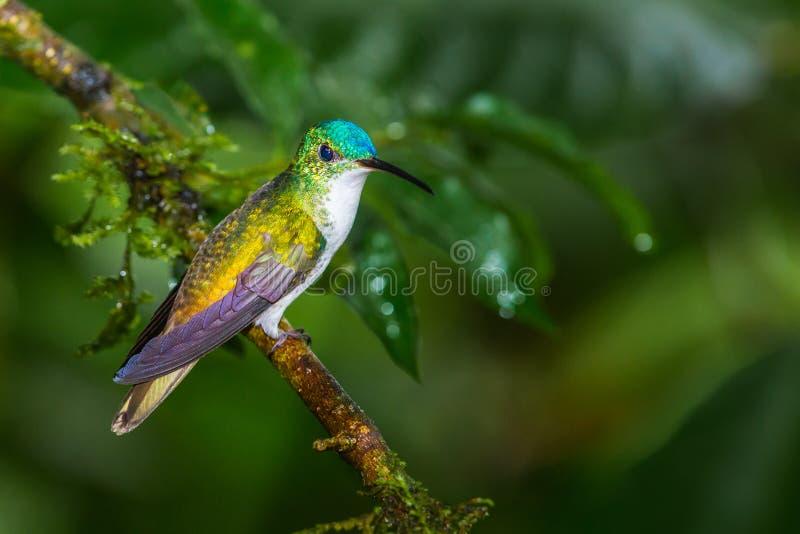 Smeraldo andino fotografia stock libera da diritti