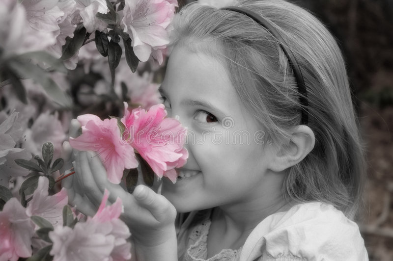 Smetta di sentire l'odore dei fiori immagine stock