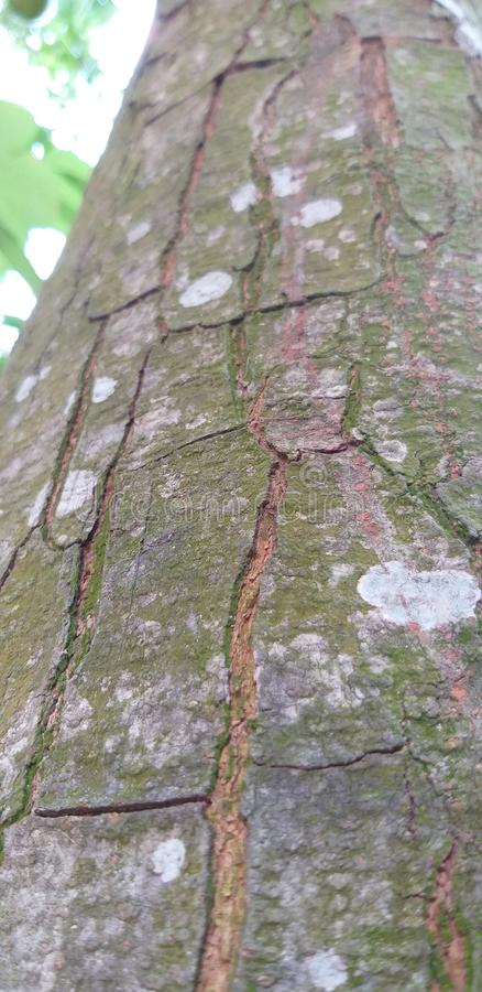 smg夺取的树的侧视图j8 库存照片