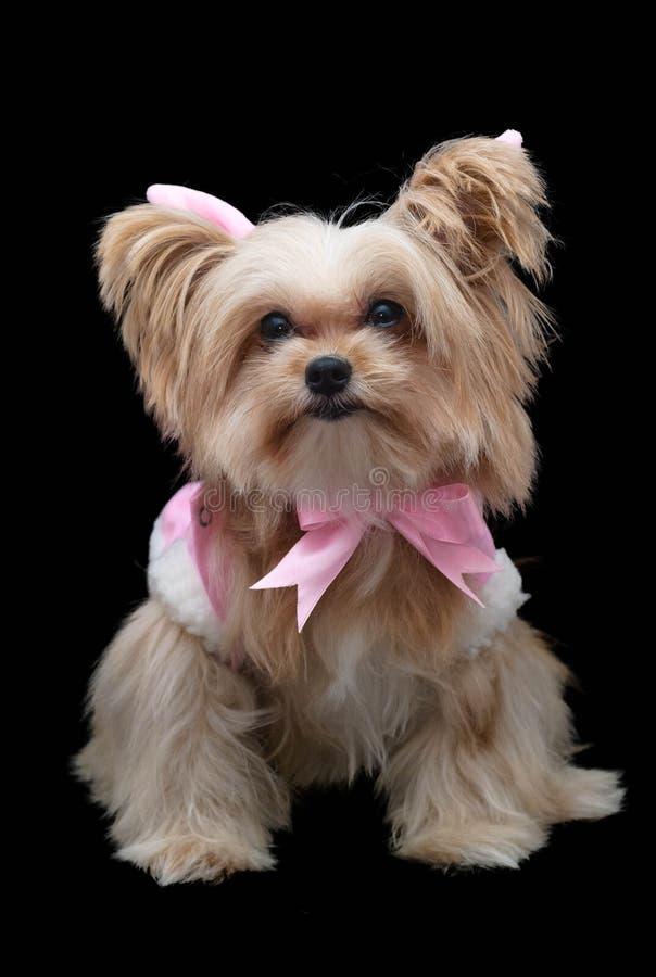 Smiley Cute Dog imagenes de archivo