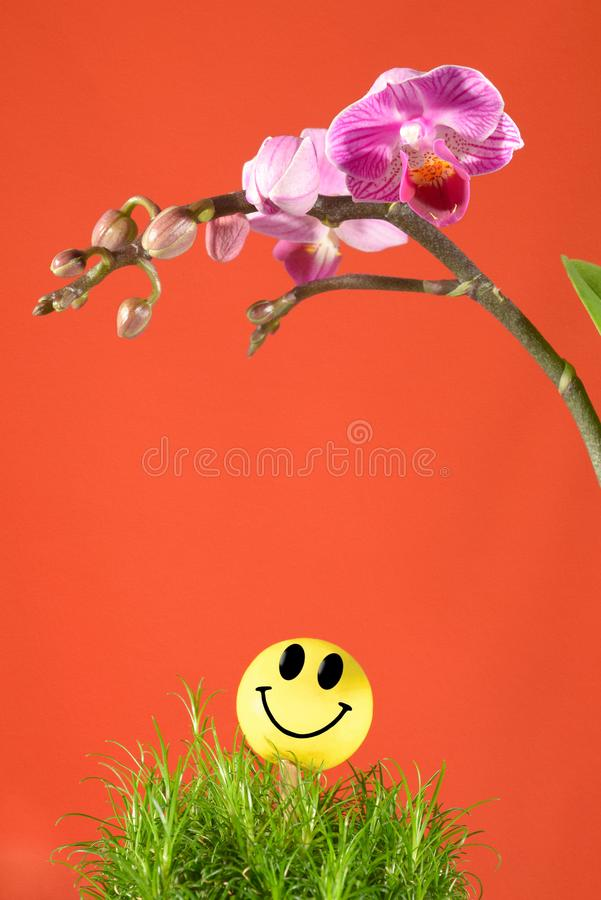 Smiley face and mini orchids Summer time be Happy stock photos