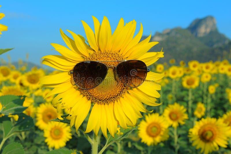 Smiley słonecznik jest ubranym okulary przeciwsłonecznych zdjęcie stock