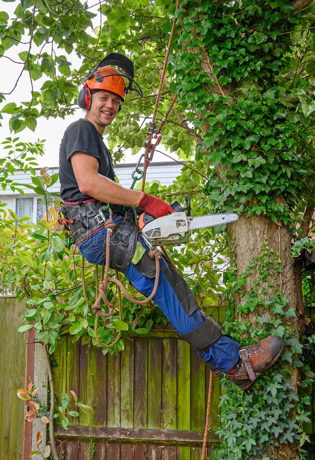 Smiling Arborist with a chainsaw. Smiling Arborist or Tree Surgeonwith a chainsaw using safety ropes up a tree royalty free stock photo