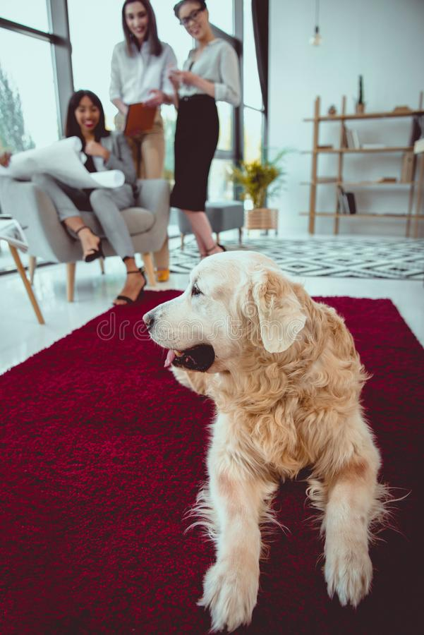 smiling architects in formal wear working with blueprint while dog lying on carpet stock photo
