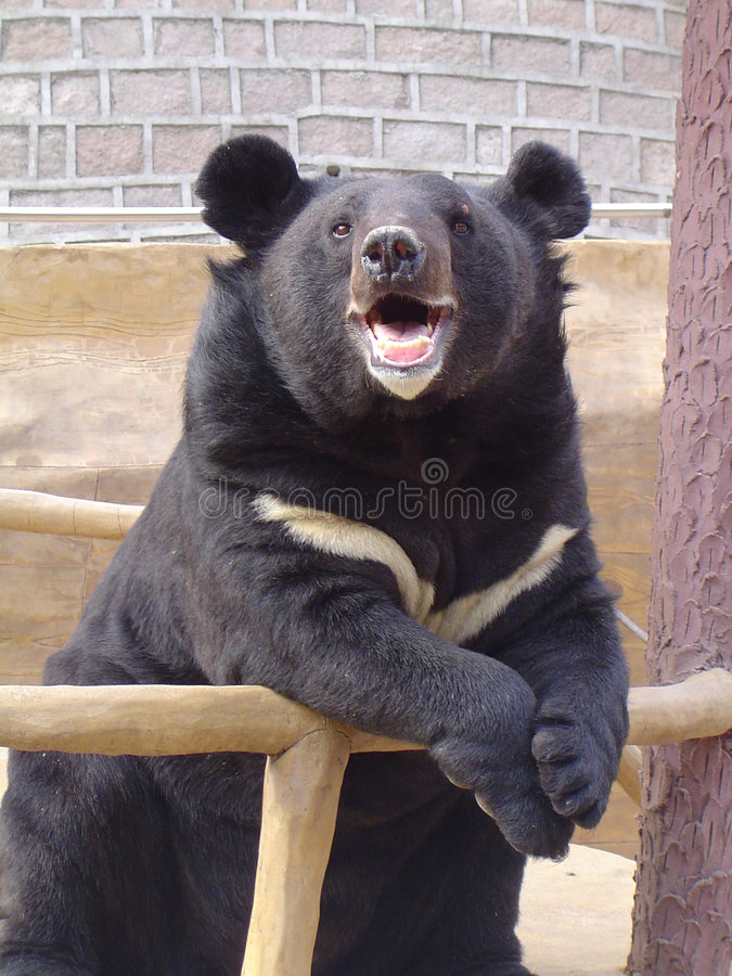 Download Smiling Bear stock photo. Image of mouth, happy, eyes, captive - 103128