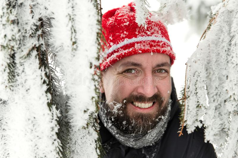 Smiling bearded man between snowy fir needles. A smiling bearded man between snowy fir needles stock images