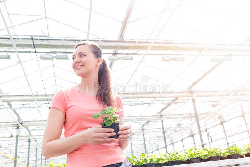 Smiling beautiful female botanist standing with seedling in greenhouse stock photography