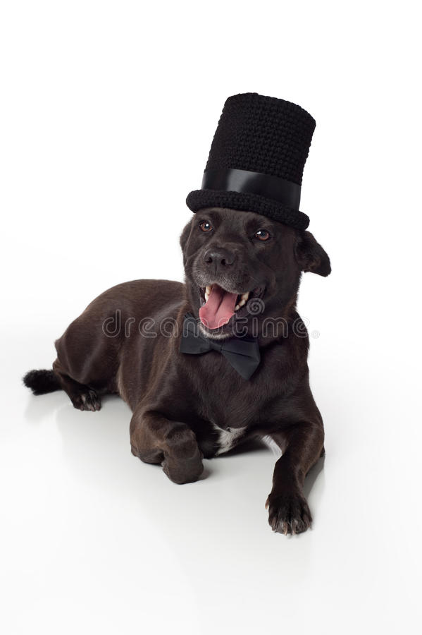 Smiling Black Mixed-Breed Dog in Top Hat & Bowtie. A happy, smiling, female, black, mixed-breed dog wearing a crocheted top hat and black bow tie. Isolated on a stock images