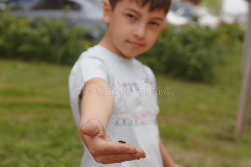 Insect a bug on the child`s palm, on a face at the boy a smile he is glad to it and the naseykomykh, the concept of acceptance of stock photo