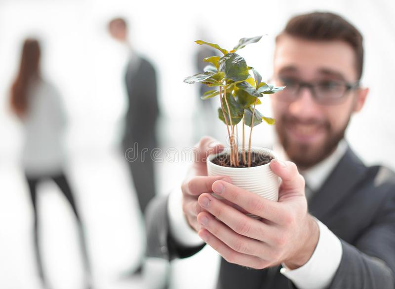 Smiling businessman shows green young sprout royalty free stock photos