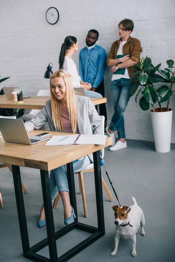 smiling businesswoman using laptop and holding jack russell terrier on leash and coworkers having meeting behind in modern stock images