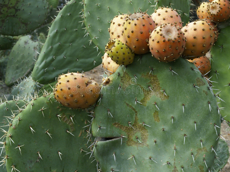 Smiling Cactus royalty free stock images