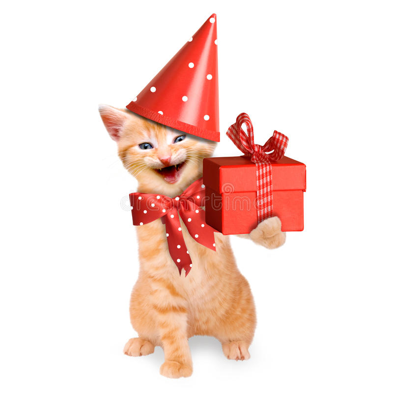 Smiling cat / kitten, happy birthday isolated. On white background royalty free stock photo