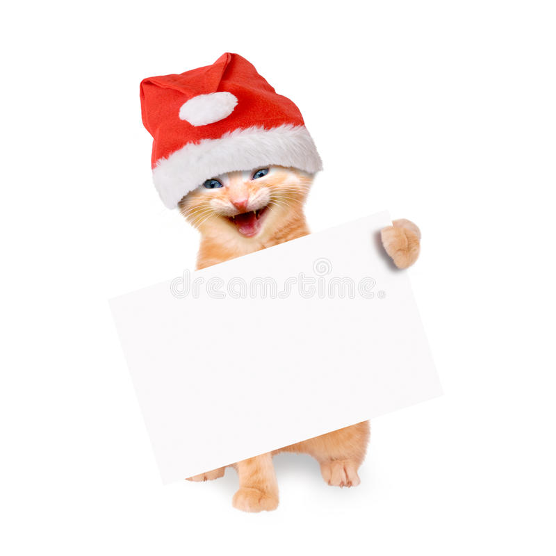 Smiling cat with santa hat and banner, isolated. On white background stock images