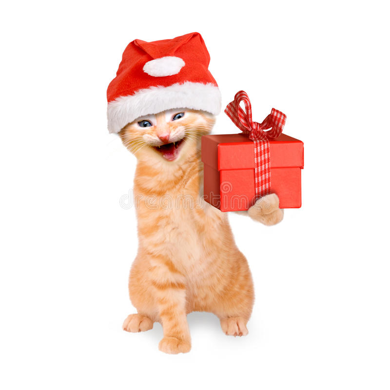 Smiling cat with santa hat and gift isolated. On white background royalty free stock photo