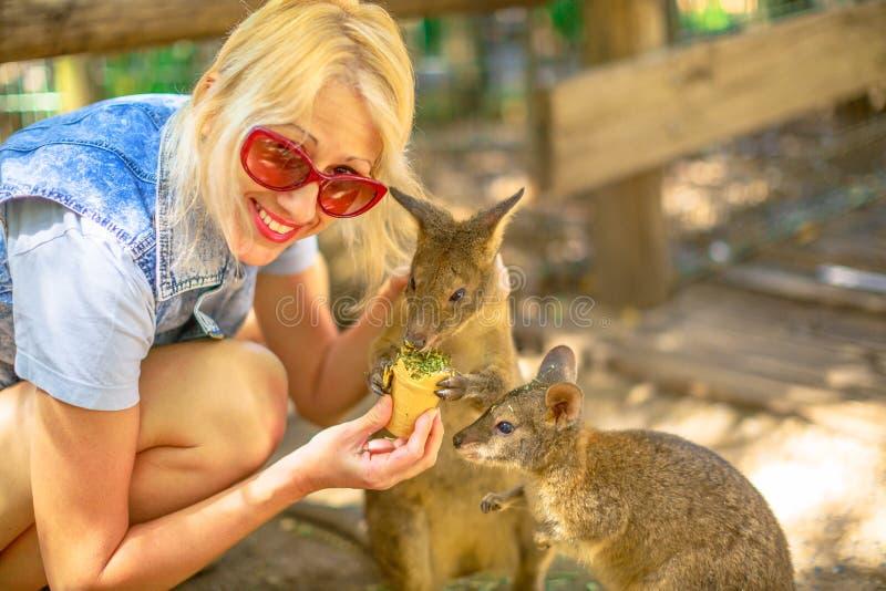 Woman feeding wallaby stock photo