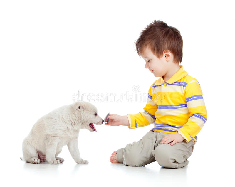 Smiling child playing with a puppy. Adorable kid boy playing with a puppy royalty free stock photo