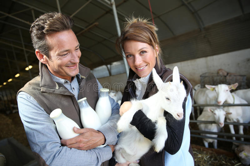 Smiling couple of breeders with goat. Cheerful couple of breeders in barn with goats royalty free stock photography