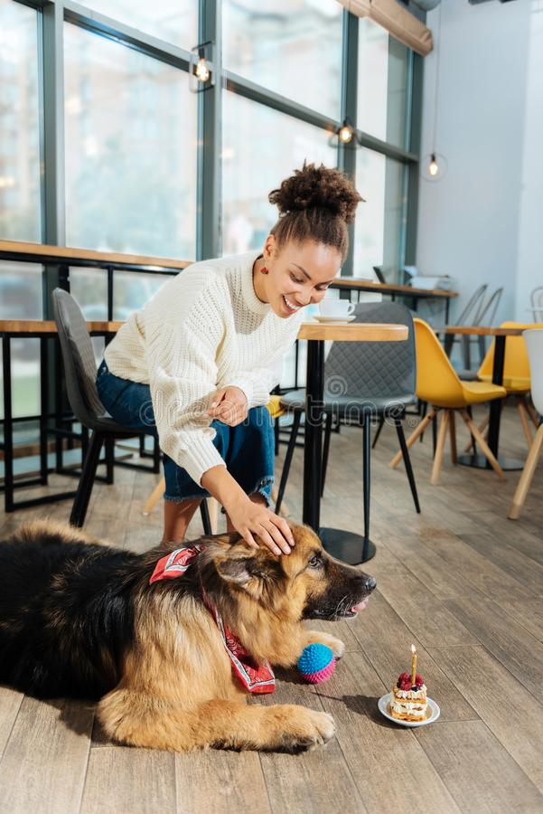 Smiling curly woman giving little birthday cake her dog. Birthday cake. Smiling curly woman giving little birthday cake her dog while spending morning in nice royalty free stock photo