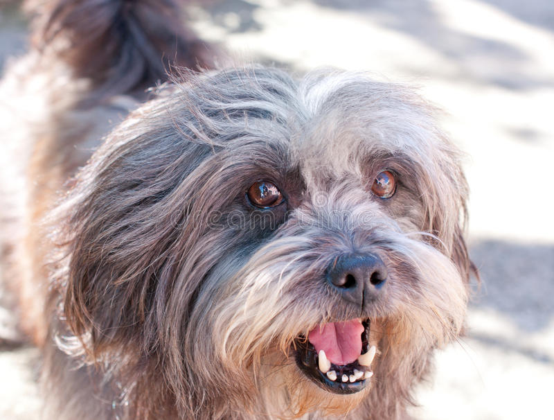 Download Smiling dog stock image. Image of furry, cute, fluffy - 24171015