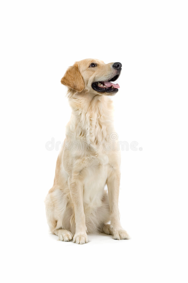 Smiling dog stock photography