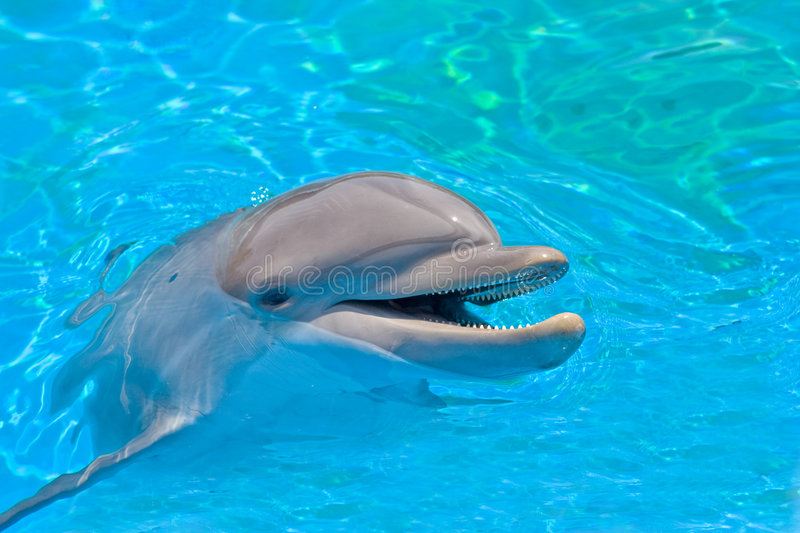 Smiling dolphin royalty free stock images