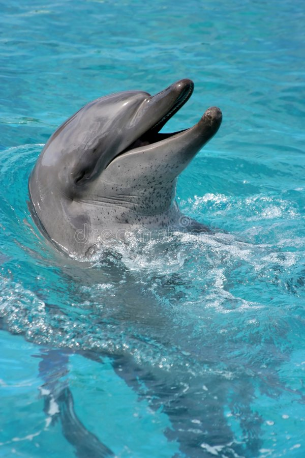 Smiling Dolphin portrait stock images