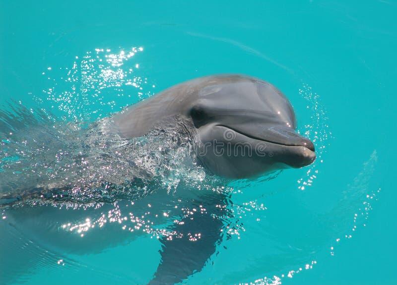 Smiling dolphin. Dolphin smile at Puerta Maya Cozumel Mexico stock photography