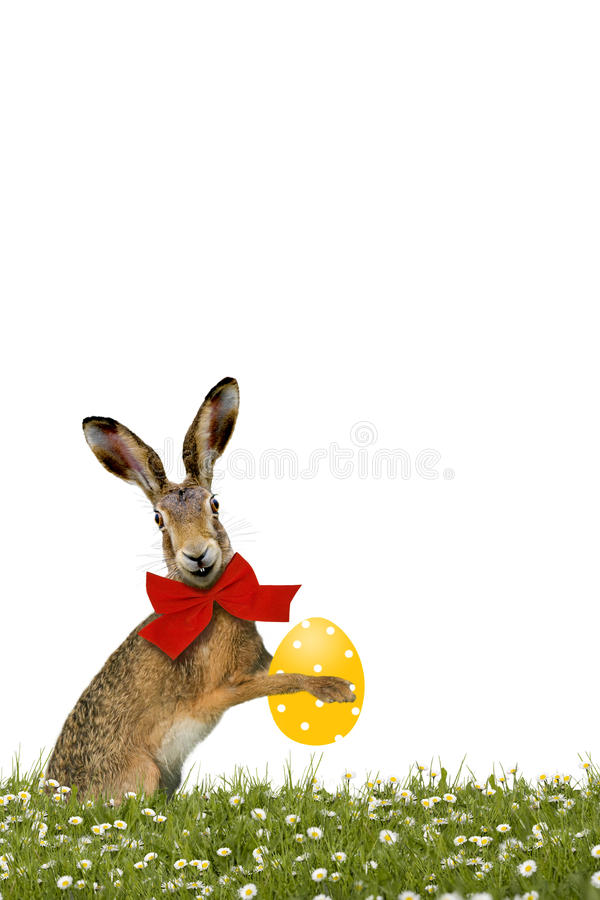 Smiling Easter Bunny with yellow easter egg. On green meadow stock image