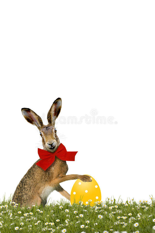 Smiling Easter Bunny with yellow easter egg. On green meadow stock photo
