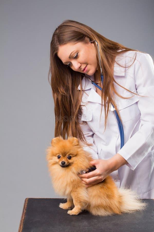 Smiling female vet with phonendoscope holding cute pomeranian do. G stock photo