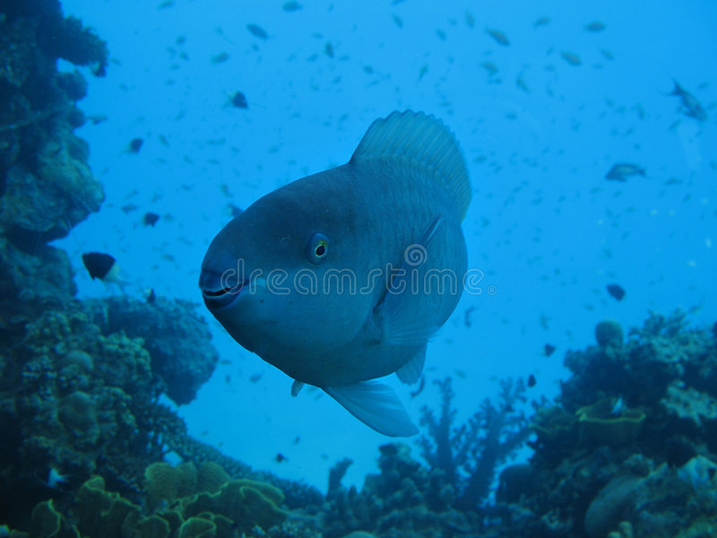 Download Smiling fish stock image. Image of close, coral, animal - 3850289