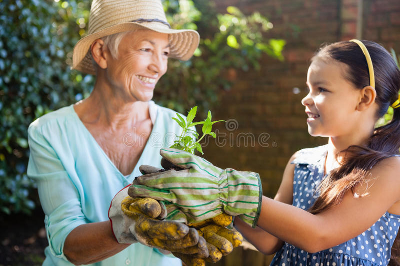 Smiling granddaughter and grandmother holding seedling. Smiling granddaughter and grandmother wearing gloves holding seedling at backyard stock images
